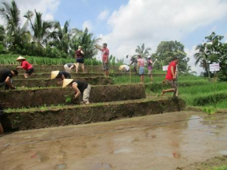 Join rice planting